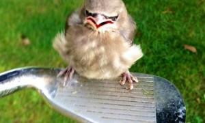 Настоящая «Angry Bird»: в США отдыхающие попали под атаку «злой» птицы.